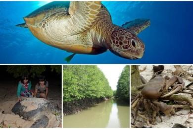 SEA TURTLES LAYING EGGS TOUR